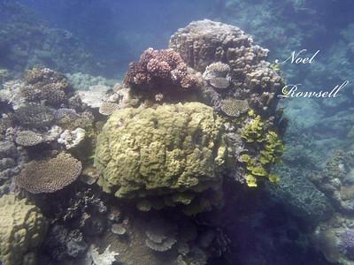 Agincourt Reef P1020760
