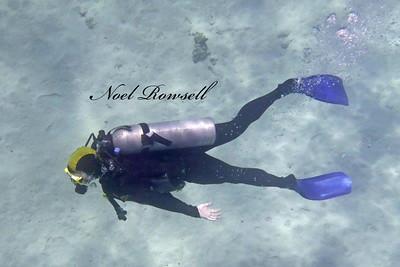 Agincourt Reef P1020484