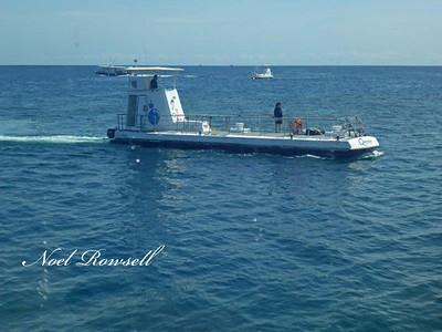 Agincourt Reef P1020389