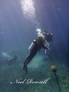 Agincourt Reef P1020792