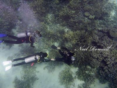 Agincourt Reef P1020790