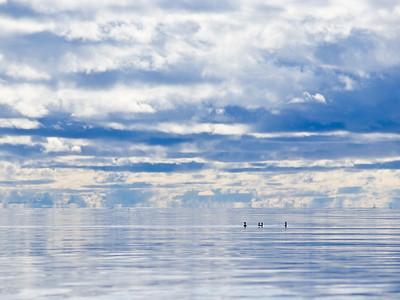 Portage Bay-Camel Riders
