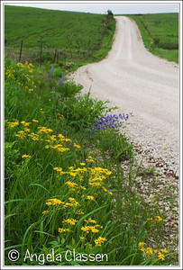 Roadside bloom, Flint Hills, near Alma, Kansas