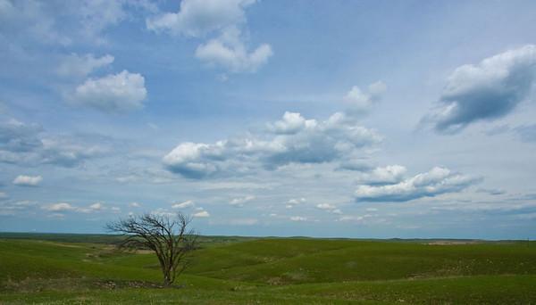 Flint Hills Tree, Flint Hills, near Alma, Kansas