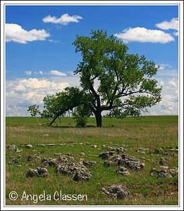 Lone Tree, Flint Hills, near Cottonwood Falls, Kansas