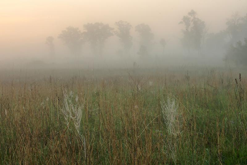 MNPR-13-26: Foggy morning spider webs