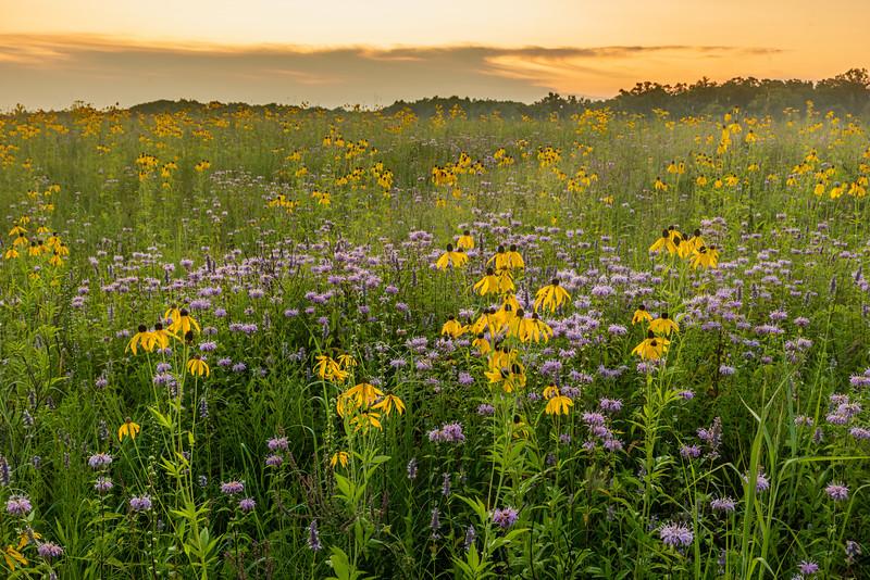 Prairie in August