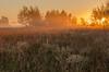 MNPR-13-194: Prairie fog at sunrise