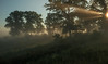 MNPR-13-159: Morning  fog and sun beams on the Oak-Savannah prairie
