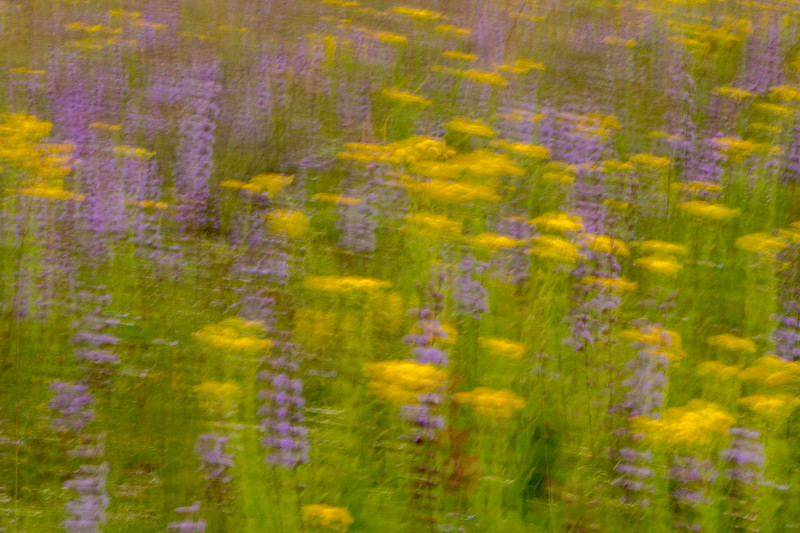 Prairie in motion