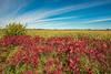 Prairie meets wetland