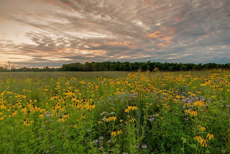 Morning on the prairie