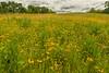 Oak-Savanna Prairie