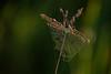 MNPR13-145: Spider web on Big Bluestem Grass