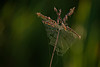 MNPR13-145: Spider web on Big Bluestem Grass