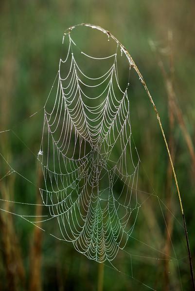 MNPR-13-16: Prairie spider web