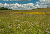 August color on the prairie