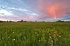 MNPR-10024: Roscoe Prairie rainbows