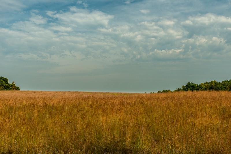 Big Bluestem grasses in September
