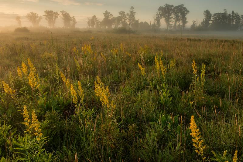 Foggy morning on the prairie