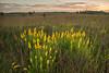 MNPR-13-170: Goldenrod on the prairie