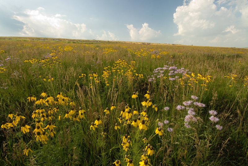 """MNPR-7116: Prairie color at """"Touch the Sky"""" NWR."""