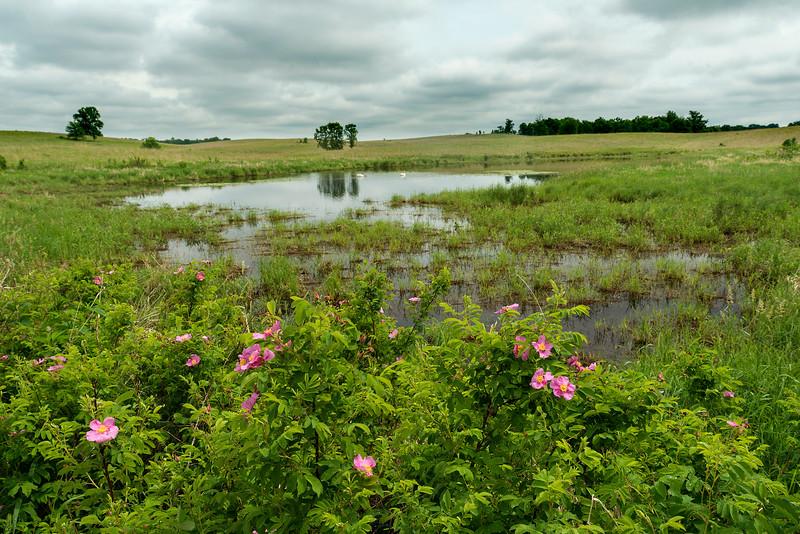 Prairie Rose environmental
