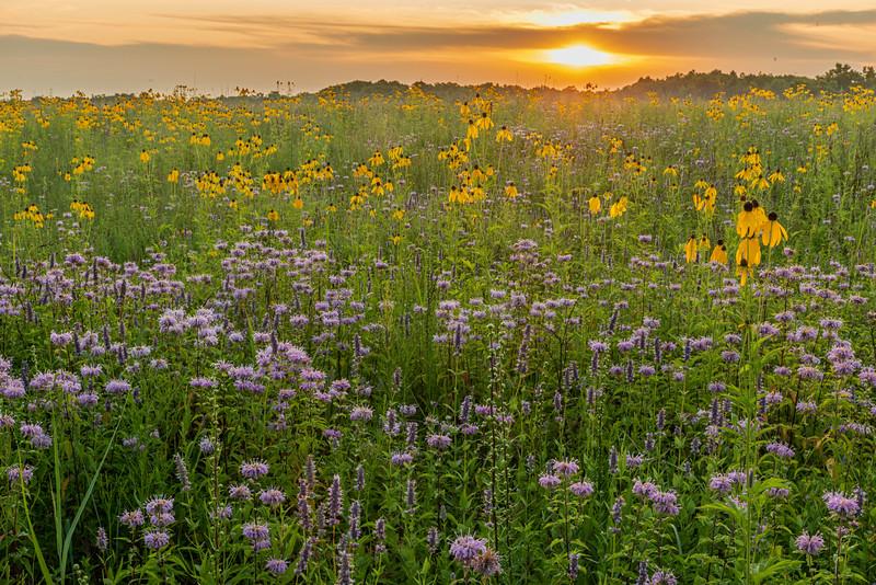 Prairie in early morning