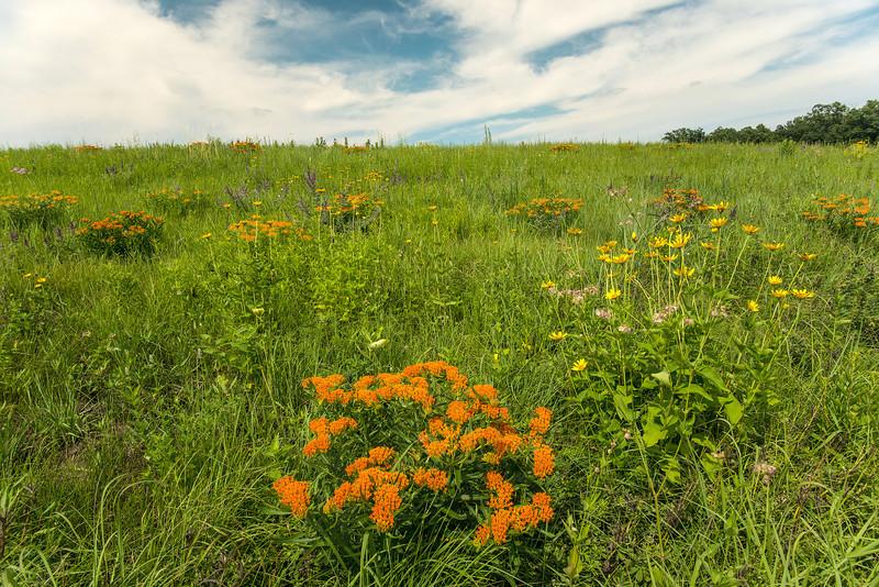 MNPR13-56: Prairie color