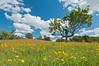 MNPR-11094: Winton Prairie