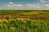 MNPR-10086: Color on the prairie