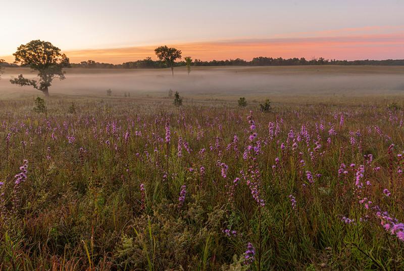 Oak-Savanna sunrise