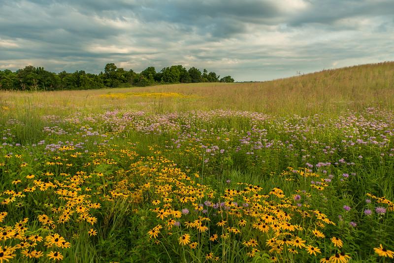 Oak-Savanna Prairie in peak color