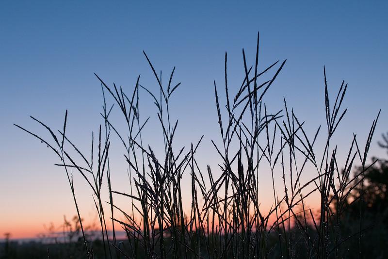 MNPR:10054: Big Bluestem grass silhouette