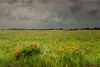 MNPR-13-50: Storm clouds over the prairie