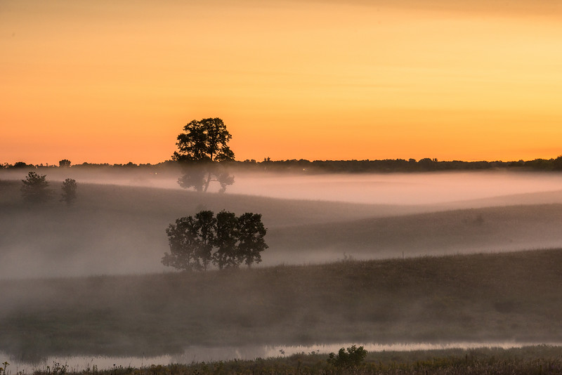 Oak-Savanna morning fog