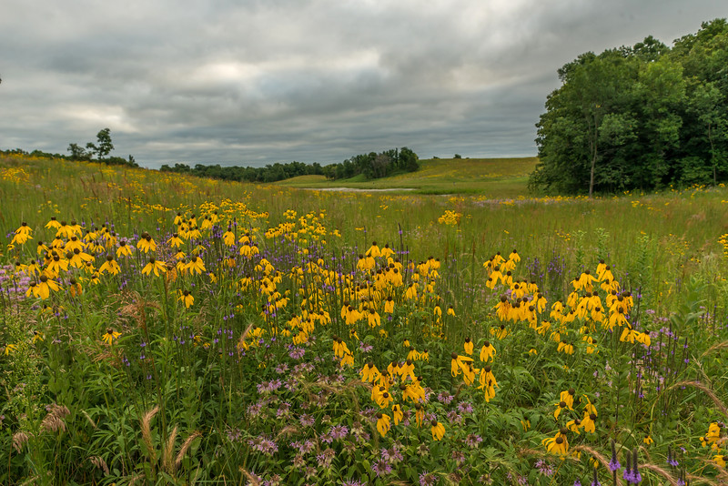 Prairie color on a Oak-Savanna Prairie