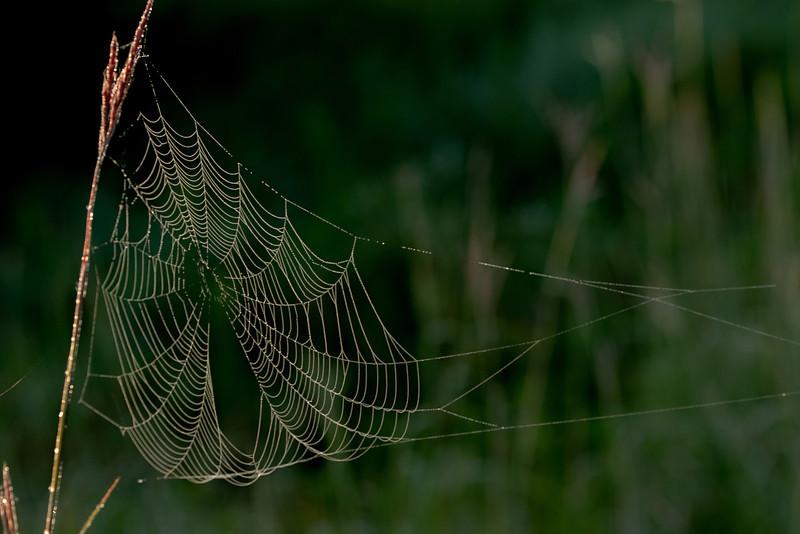 MNPR-13-155: Prairie Spider web