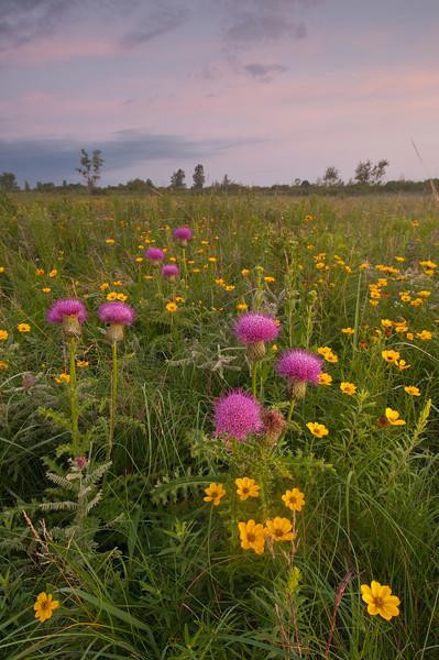 MNPR:11022: Prairie color