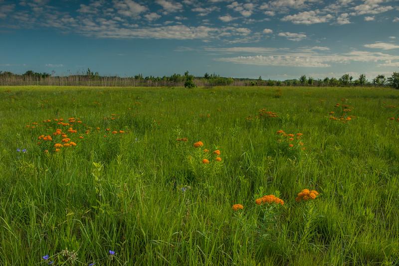 Oak-Savannah Prairie at Sherburne NWR