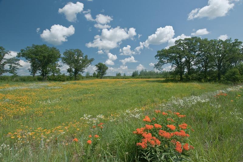 MNPR-9018: Oak-Savannah Prairie-Where prairie meets the forest.
