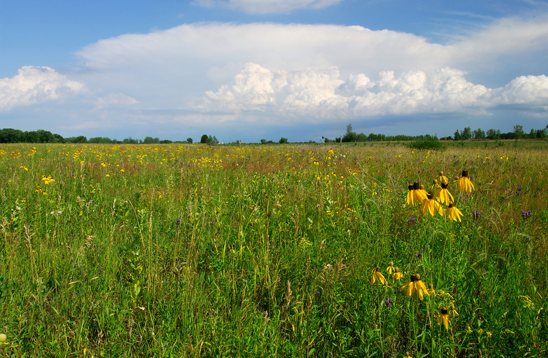 MNPR-6052 Stearns Prairie: While driving along the highway I noticed the storm clouds beginning to take shape in the west, luckily I was very close to this prairie and managed to compose a few images.