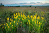 MNPR-13-167: Prairie sunrise