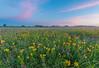 Roscoe Prairie