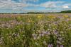 Oak-Savanna Prairie at Crow-Hassan