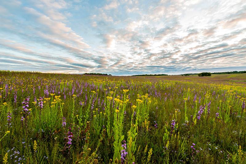 Prairie color