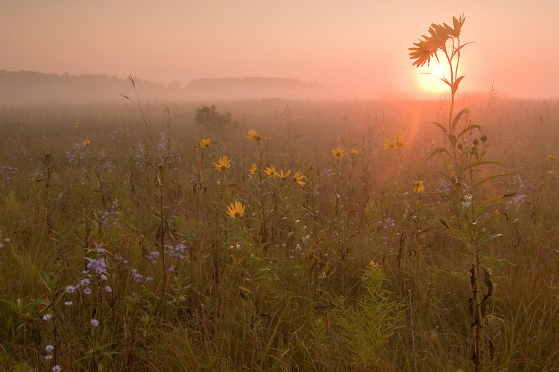 MNPR-9073: Misty morning sunrise