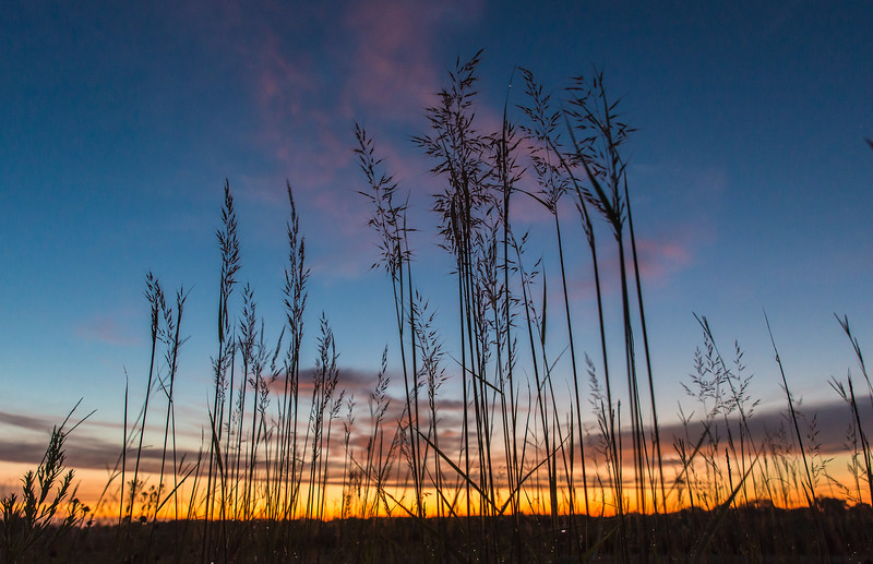 Indian Grass silhouette