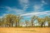 Spring in the Oak-Savanna