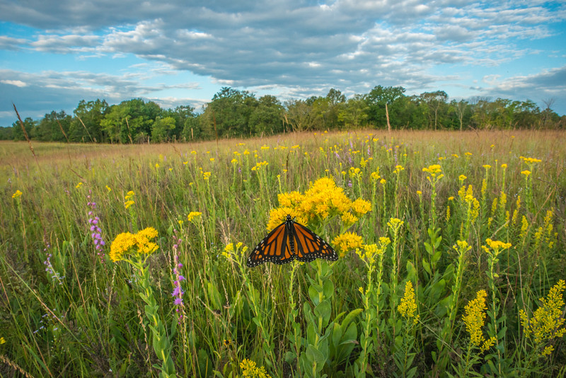 Monarch PrairieScape